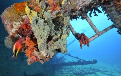 Croisière bio-marine en Egypte