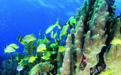 Pouvons-nous sauver les récifs coralliens ?