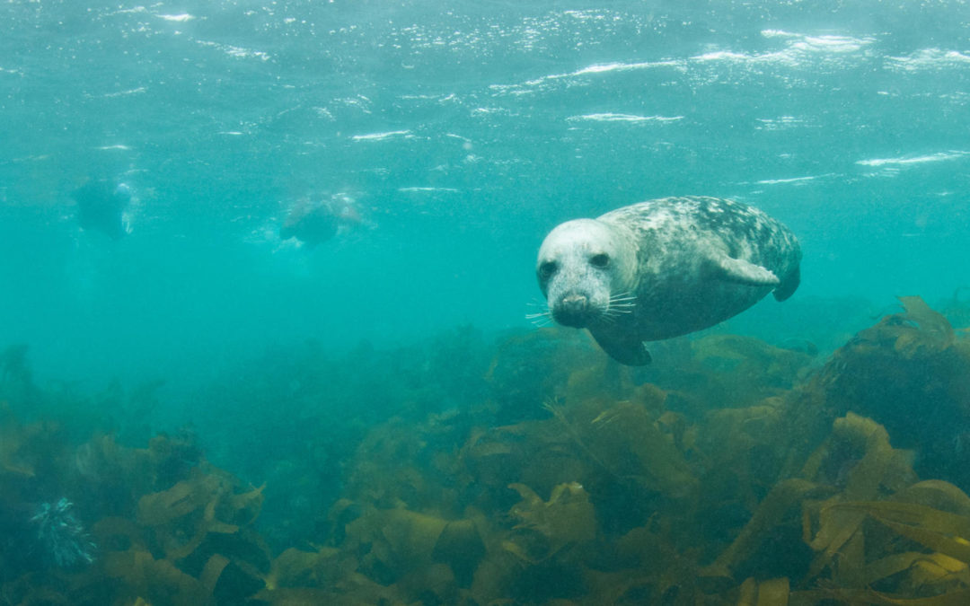 Week-end plongée en Bretagne, La Baie de Morlaix